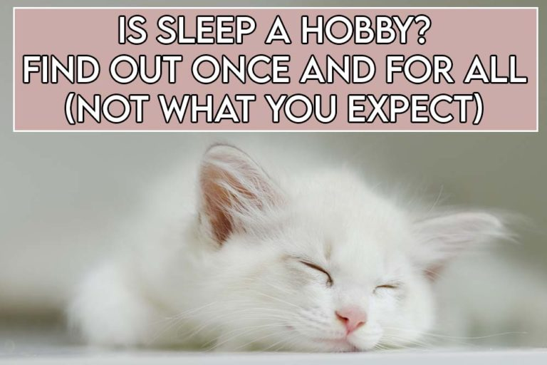 This image features the relevant title regarding sleep as a hobby and also includes an evocative image of a cat sleeping