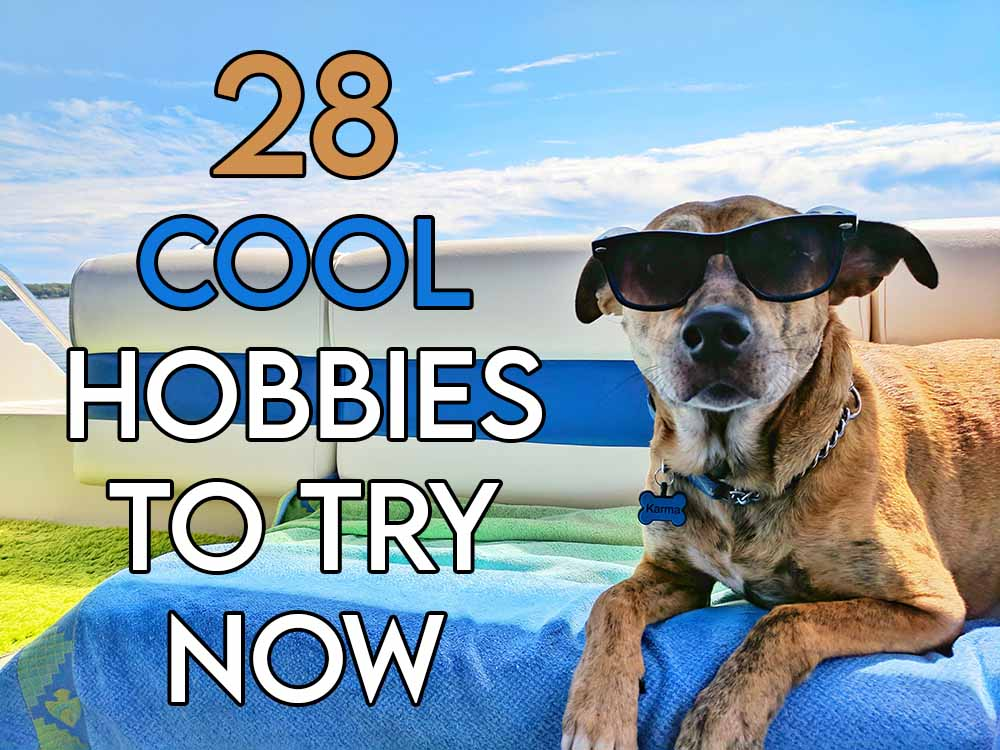 this image features the relevant article title about some cool hobbies to try and also features an evocative image of a dog wearing shades looking cool
